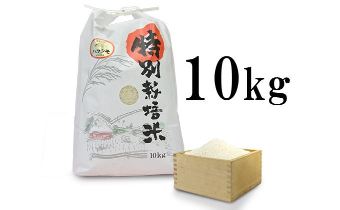 【先行予約】安八町産 ハツシモ(ぎふクリーン米)10kg 令和3年産【精米】