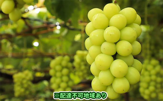 岡山県産 シャインマスカット 4房(合計2.8kg以上)