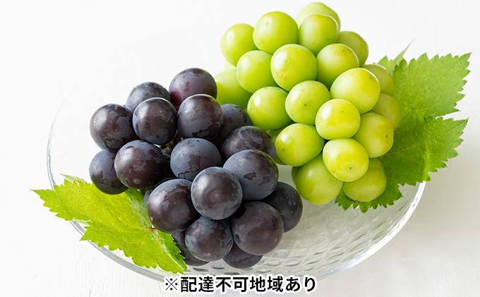 岡山県産 ニューピオーネ 4房とシャインマスカット 2房 (合計3.4kg以上)