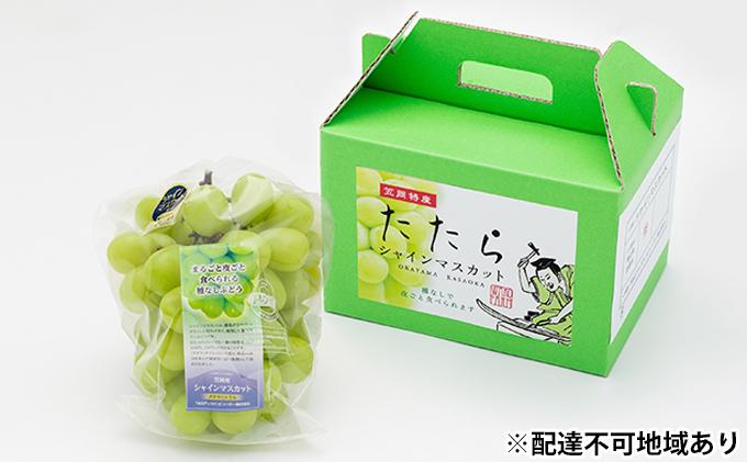 岡山県産 冷温保存 たたらみねらる シャインマスカット 1房(約600g)
