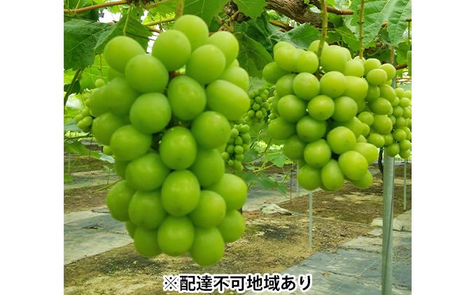 岡山県産 たたらみねらる シャインマスカット 2房(1房約600g)