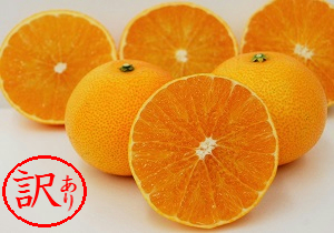 【訳あり品】みかん職人の夢オレンジ 小粒っ子5kg