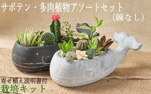 サボテン多肉植物の小苗アソートセットWーS(棘なし) 寄せ植え説明書付
