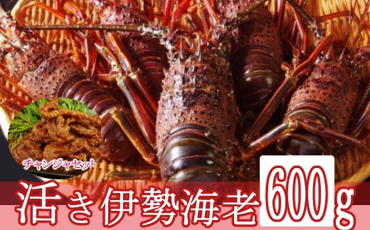 【漁港直送】活き伊勢海老(600g)&天然まぐろのチャンジャセット