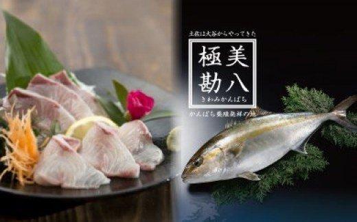 「きわめて美しく、極めて美味しい」かんぱち  極美勘八(きわみかんぱち)セット MM012
