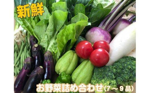 南国土佐の新鮮お野菜詰め合わせ(7~9品) NK006