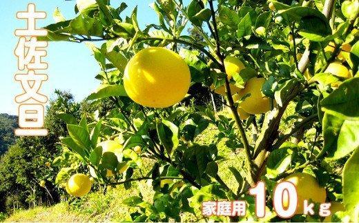 【訳あり】浦ノ内特産 家庭用土佐文旦10kg MKJ003