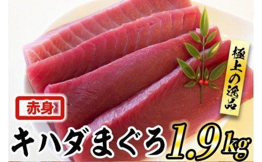 【訳あり】キハダまぐろ赤身1.9kgセット TY015