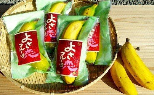 高知初!! 純国産 有機栽培 皮ごと食べられるバナナ HNT002