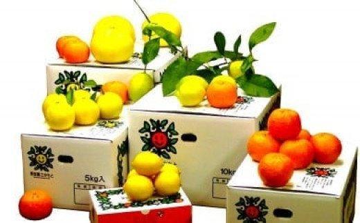 【限定25セット】須崎特産柑橘 特上品5kg箱セット!ポンカン・土佐文旦・小夏が届く!