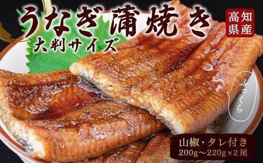 高知県産うなぎの蒲焼き(2尾セット)TY018
