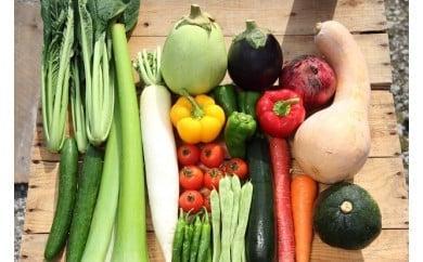 【年末だけの限定】毎月の野菜便り『高知の野菜12回お届け定期便』 HNT4000