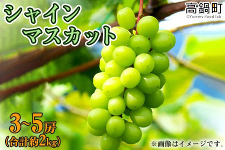 <宮崎県 シャインマスカット 3〜5房(合計約2kg)>2021年9月中旬迄に順次出荷