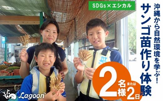【SDGs×エシカル】沖縄から自然環境を学ぶ!『サンゴ苗作り体験』(2名様または2株)
