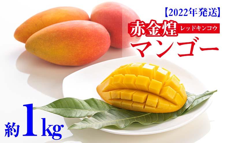 【2022年発送】赤金煌(レッドキンコウ)マンゴー約1kg
