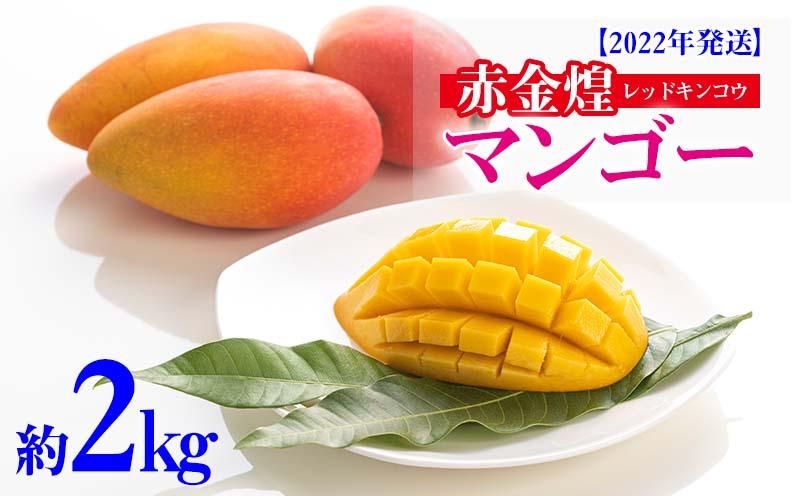 【2022年発送】赤金煌(レッドキンコウ)マンゴー約2kg