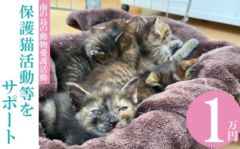 【南の島の動物愛護活動】保護猫活動等をサポート(1万円)