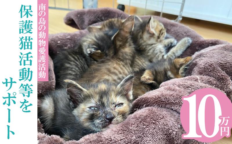 【南の島の動物愛護活動】保護猫活動等をサポート(10万円)