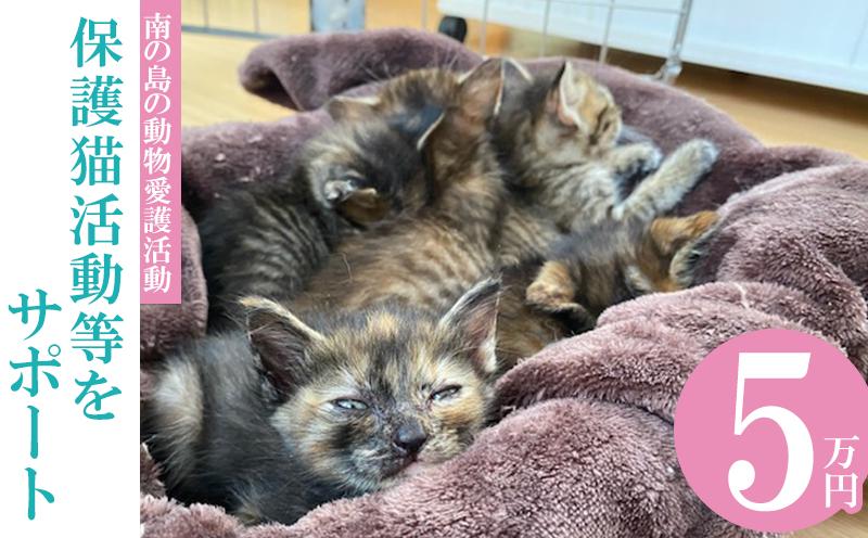 【南の島の動物愛護活動】保護猫活動等をサポート(5万円)